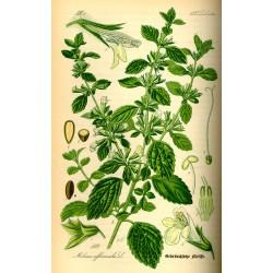 Lemon Balm 250 gr