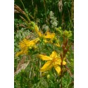 St-john s Wort for pain 50mL
