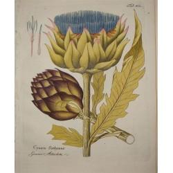 Artichoke Leaf 500 gr