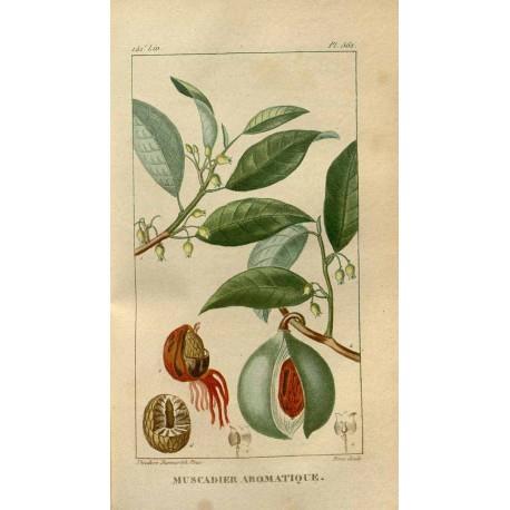 Ground Nutmeg 250 gr
