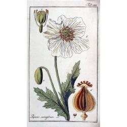 Poppy Seed 250 gr