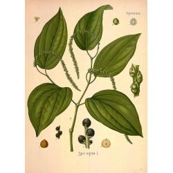 Ground Black Pepper 250 gr