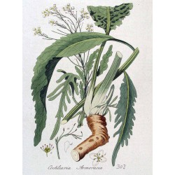Ground Horseradish 250 gr