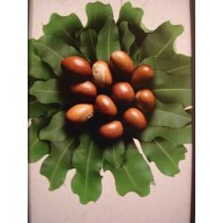 Shea Butter Organic & fair trade 100 gr