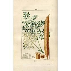 moringa leaf 250 gr