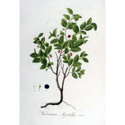 Bilberry Leaf 250 gr fine cut