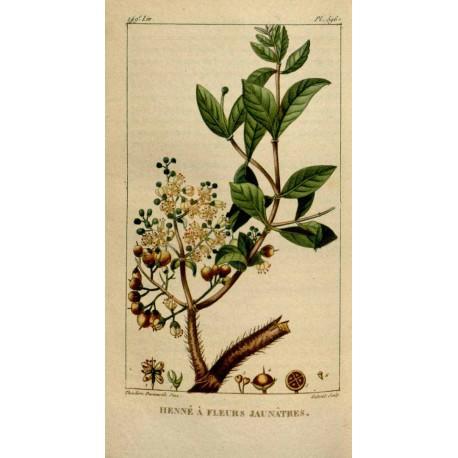 Henna Natural 250g