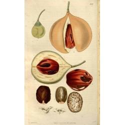 Whole Nutmeg 500 gr