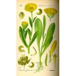 Marigold 250 gr