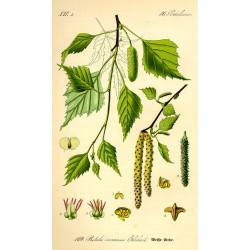 Birch Leaf 500 gr