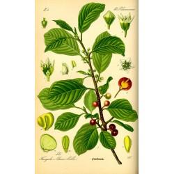 Buckthorn 500 gr