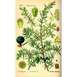 Juniper Berry 250 gr