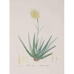 Aloe Powder 250 gr