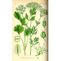 Anise Green Seed 500 gr