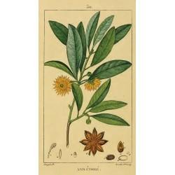 Anise Star Seed 500 gr