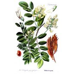 Astragalus 500 gr
