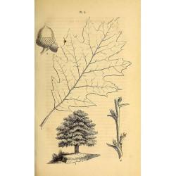 Oak Bark 500 gr