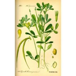 Fenugreek Seeds 250 gr