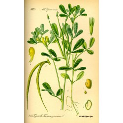 Fenugreek Seeds 1 kg