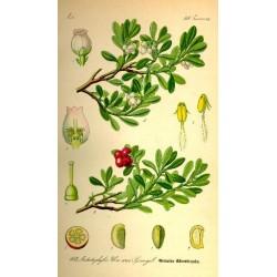 Bearberry 250 gr