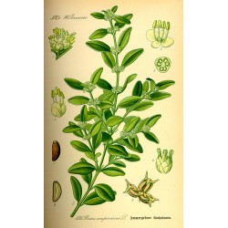 French Boxwood 500 gr