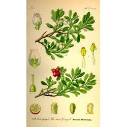 Bearberry 500 gr
