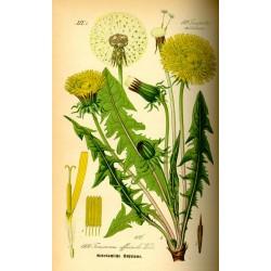 Dandelion Leaf 250 gr