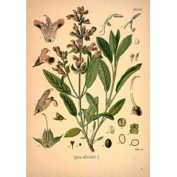 Sage Leaf 250 gr